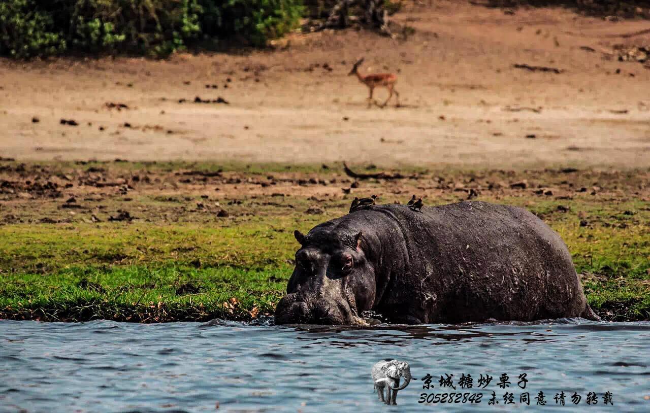 动物的伊甸园——博茨瓦纳