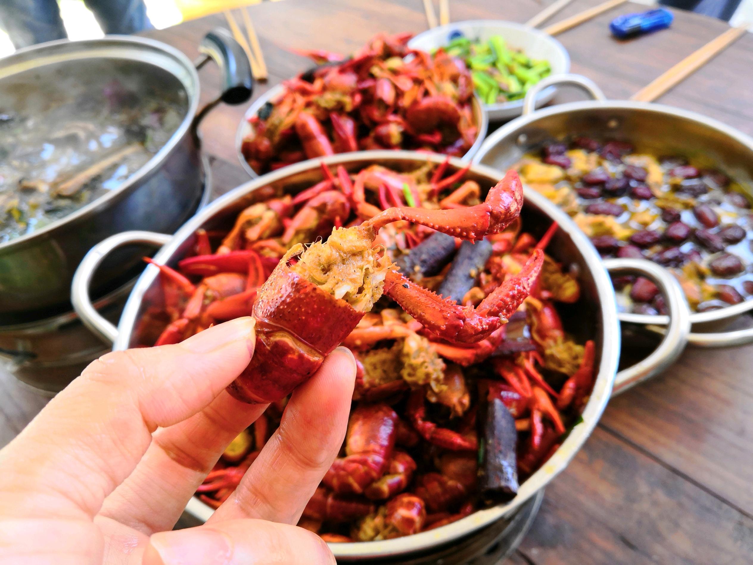 1天40斤小龙虾~湖南之旅