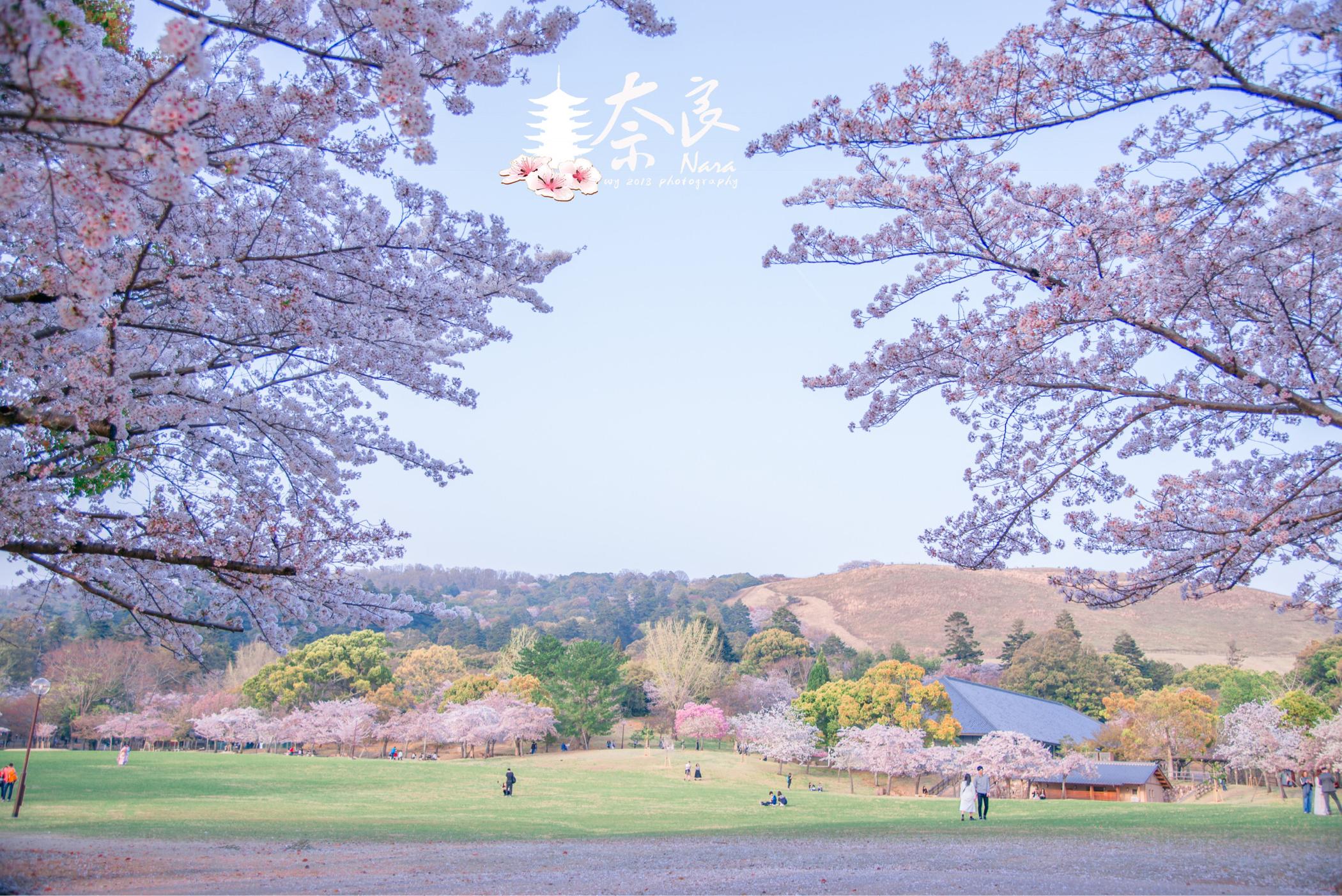 再行日本——关东关西的樱花季雨(多图+赏樱攻略)