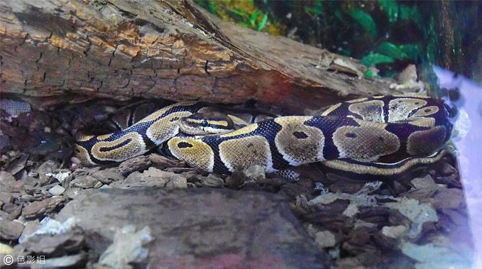 成都动物园,看了冬眠中的蛇图片