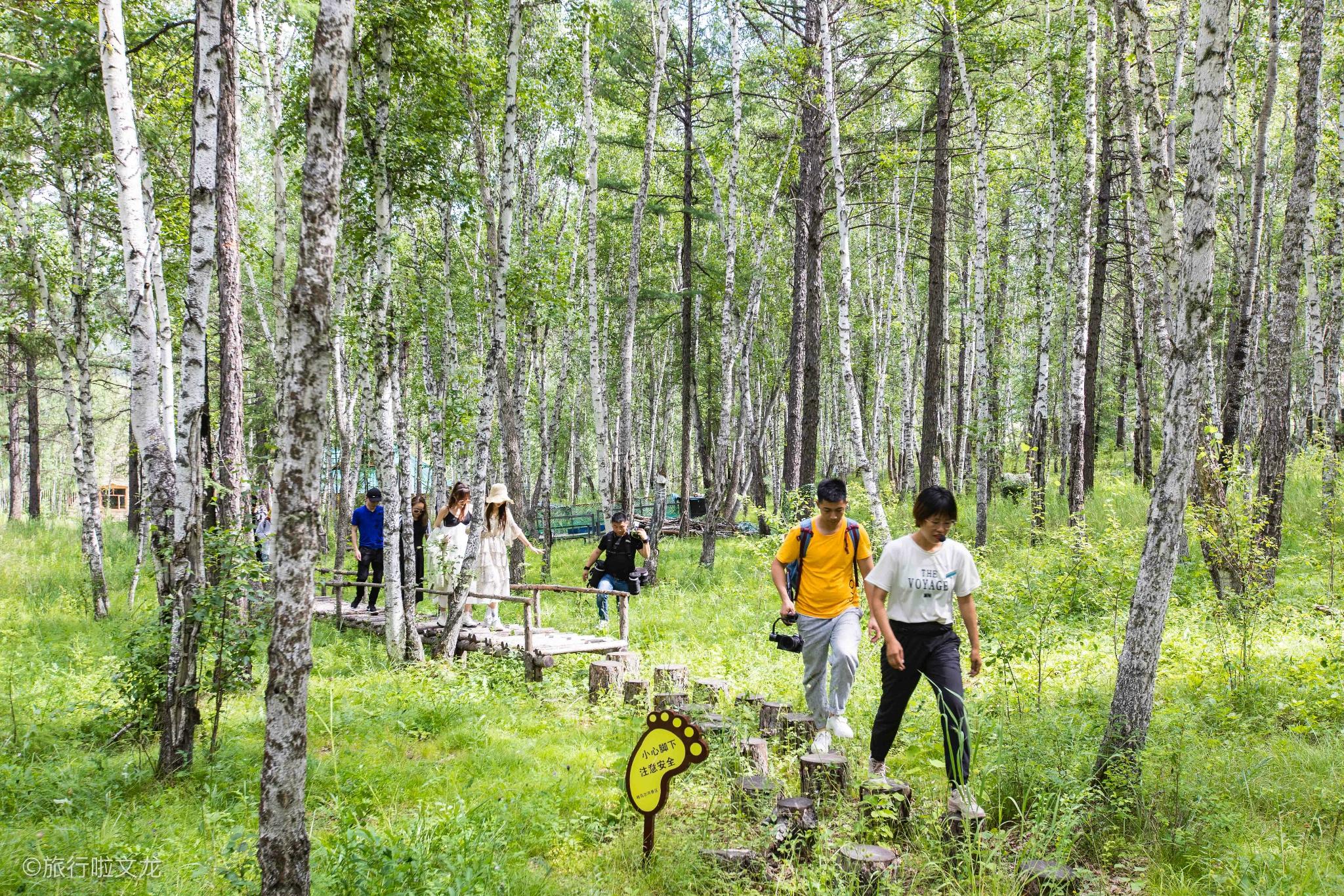 25度夏天的呼伦贝尔草原,感受丛林秘境,探访驯鹿民族