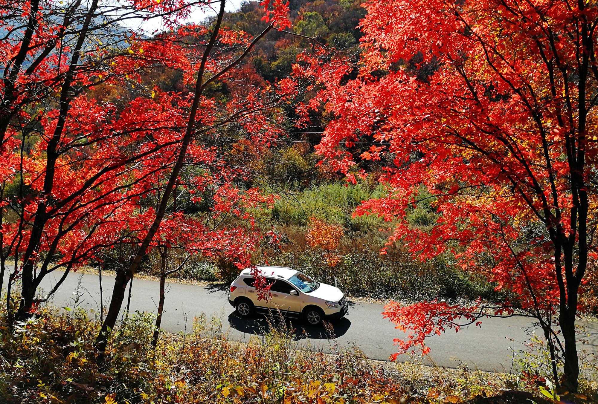 """十月最""""火""""自驾线路,枫叶之都辽宁本溪寻找最美的秋色"""