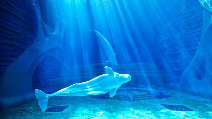 每晚10万的波塞冬水底套房,海豚湾已圈粉无数,酒店以海洋为主题打造度图片