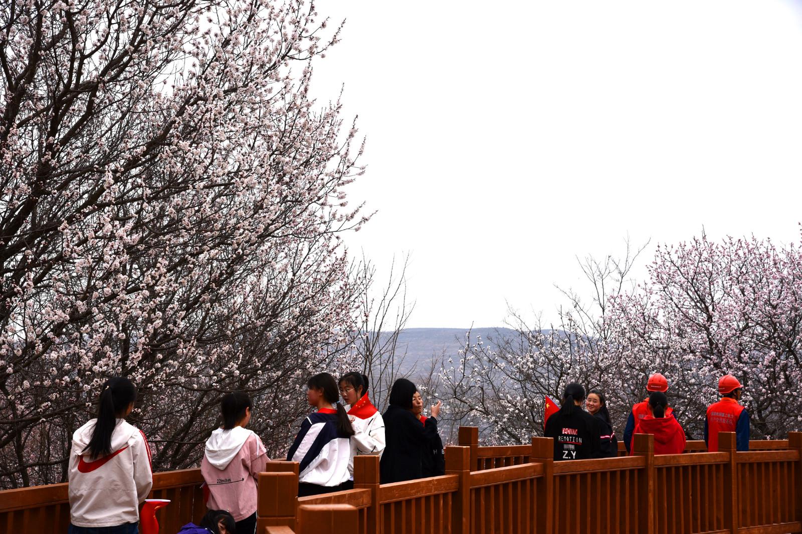 春风十里,花中等你   第十六届宁夏固原六盘山山花节今日正式启动!