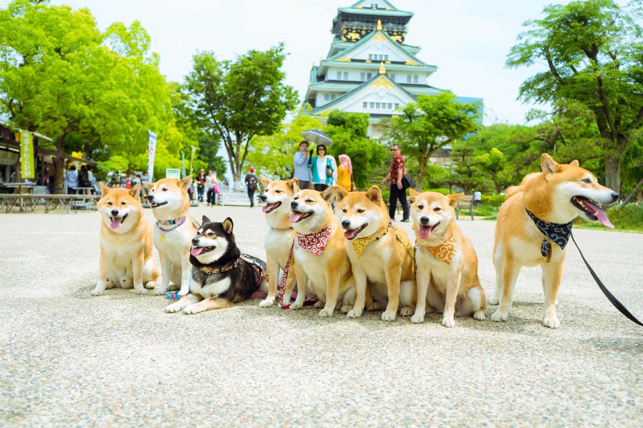 #写游记拿旅行基金#大阪经典两日游超实用攻略,记得买周游卡哟!