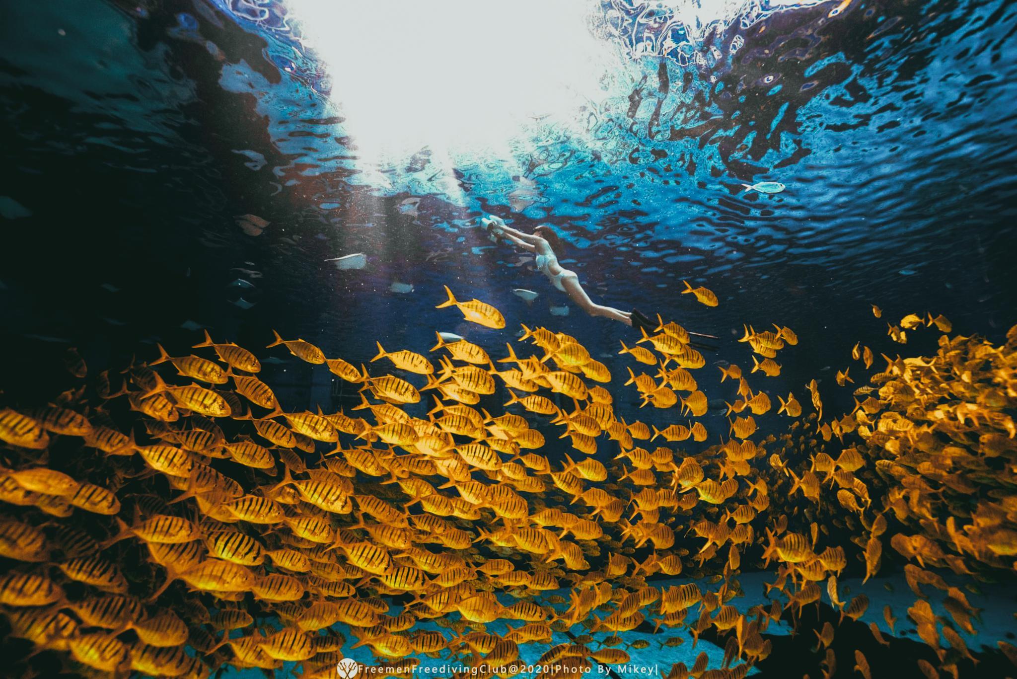 来一次小众海南游,轻松GET自由潜+水下摄影🧜♀️