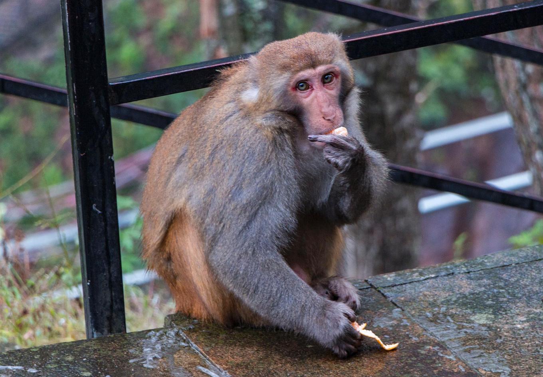 除了看猴子,猴王谷景区内的自然风景也是非常的不错,特别是下雨后的