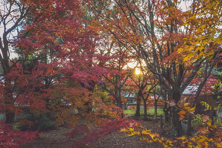 枫叶自然风景图片大全