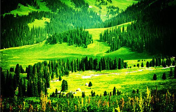 恰西森林公园旅游景点图片