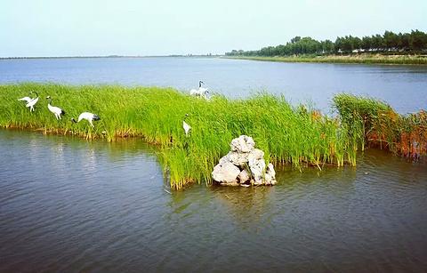 大安嫩江湾国家湿地公园