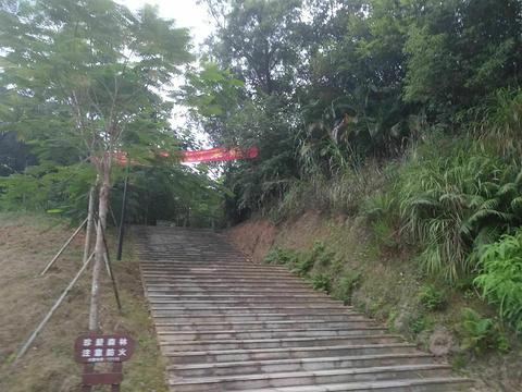 金鸡岭森林公园