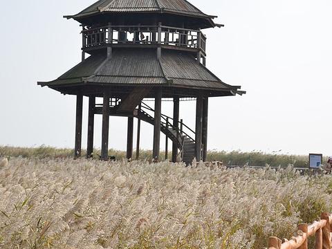 黄河入海口旅游景点图片