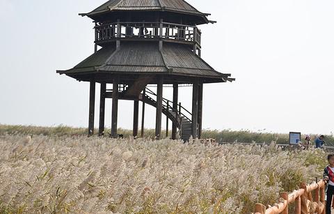 黄河入海口的图片