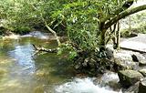 水上森林上段