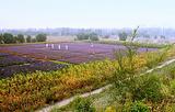 张北薰衣草庄园