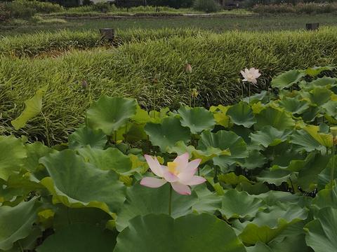 田野花海旅游景点图片