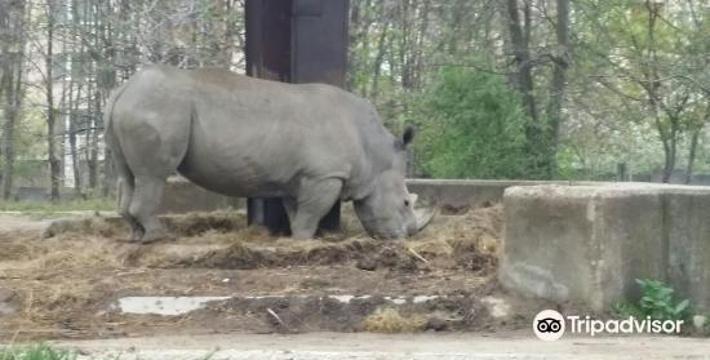 索菲亚动物园旅游景点图片