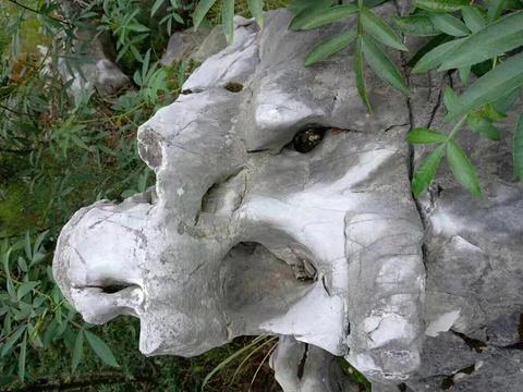 贵州思南乌江喀斯特国家地质公园的图片
