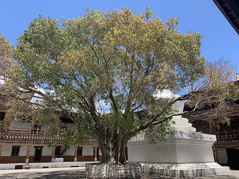 普那卡旅游图片