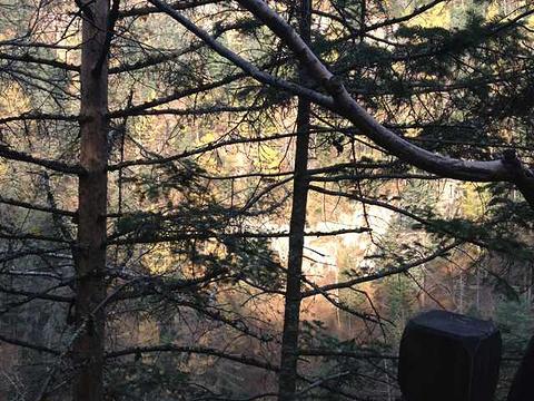 镜泊湖地下森林旅游景点图片