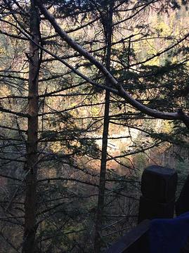 镜泊湖地下森林的图片