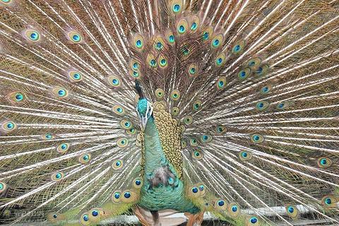 西双版纳热带动物园的图片
