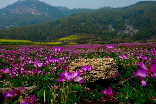 梅岭竹海明珠旅游景点图片