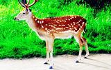 国家级桃红岭梅花鹿保护区