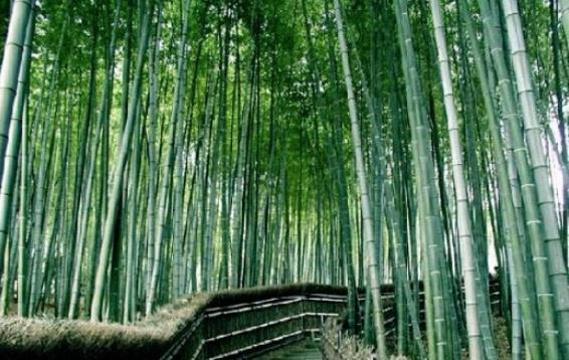 万竹园旅游景点图片