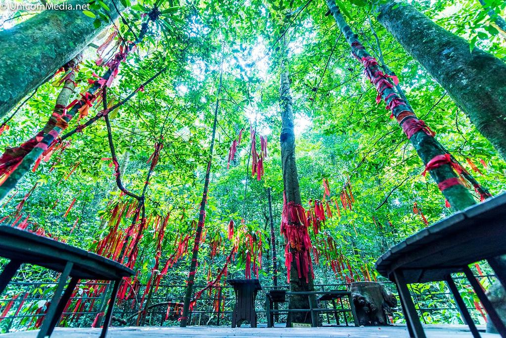 西双版纳热带雨林国家公园望天树景区@晓明的小名是小明