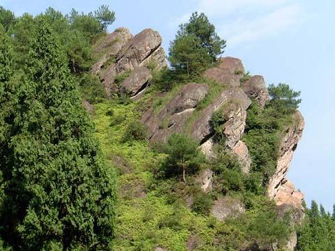 西双版纳猴山的图片