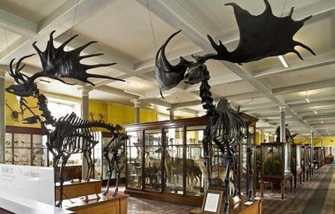 爱尔兰国家自然历史博物馆