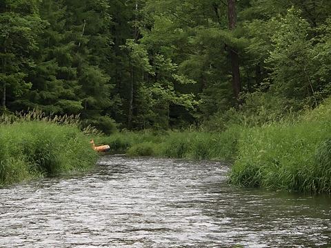长白山白溪漂流旅游景点图片