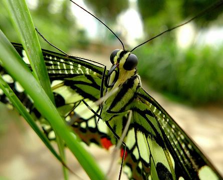 蝴蝶园的图片