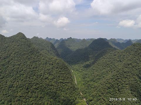 石上森林旅游景点图片