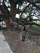 古樟林风景区