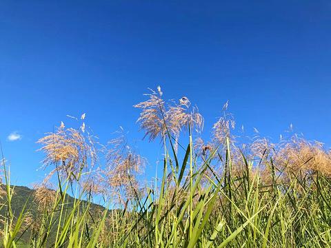 北海湿地公园旅游景点图片