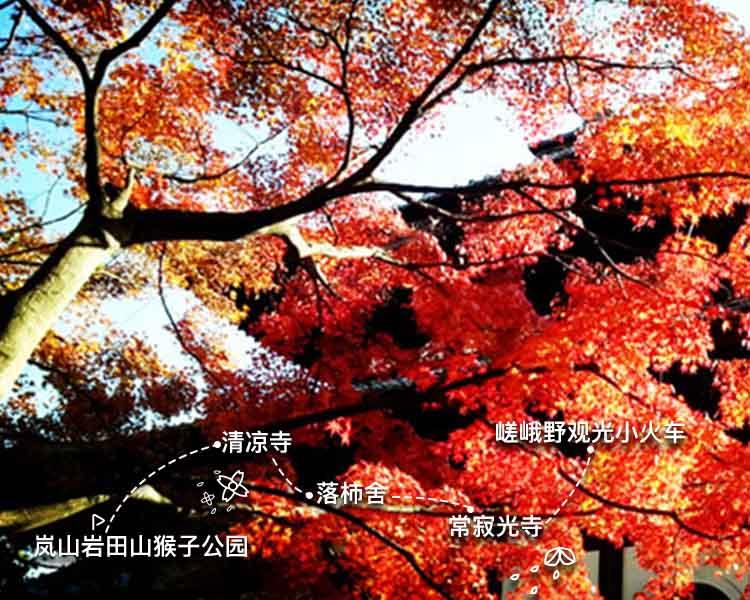 一叶知秋京都岚山狩红叶