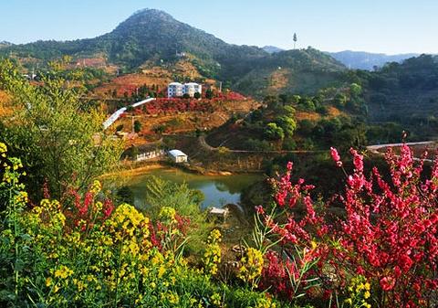 从化大金峰百花果景区的图片