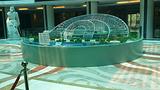 太阳谷微排国际酒店自助餐