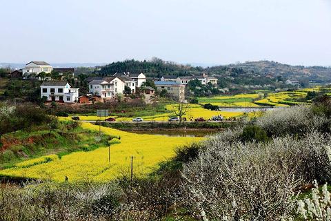 萱洲古镇的图片