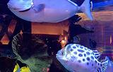 长隆横琴湾酒店(珠海长隆旗舰店)·海豚自助餐厅