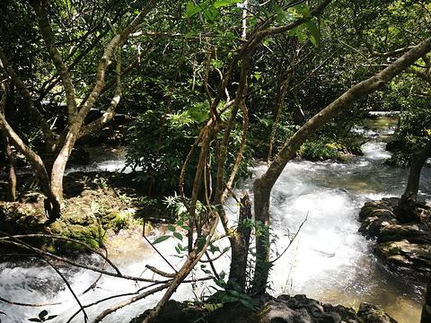 水上森林-小卖部旅游景点图片