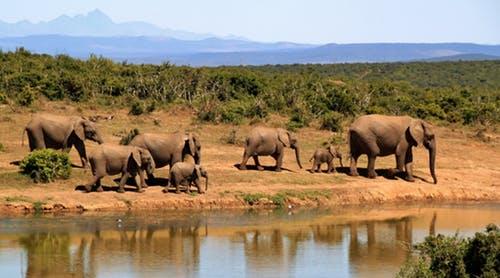 肯尼亚动物保护区11日线路