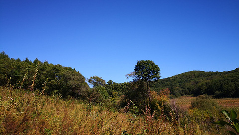吉林寒葱顶国家森林公园