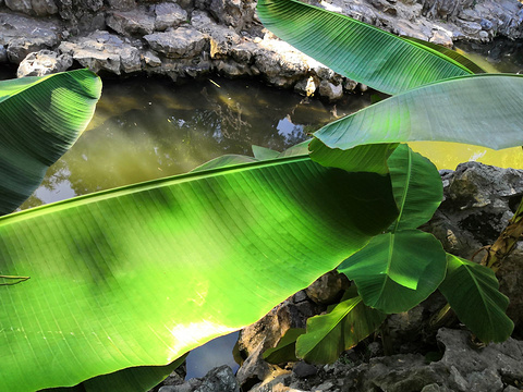江南园林的图片