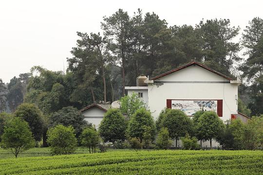 成都成佳茶文化观光区旅游景点图片