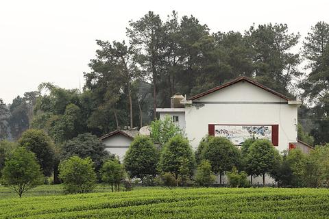 成都成佳茶文化观光区