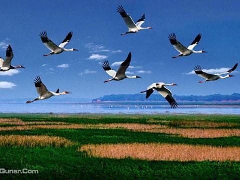 鄱阳湖国家湿地公园