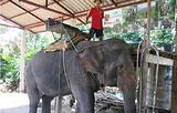 双子大象营